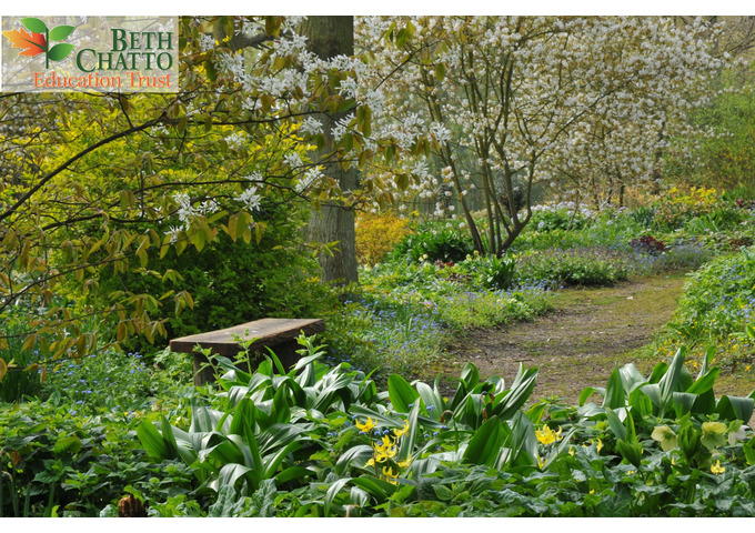Drawing the Garden in Spring