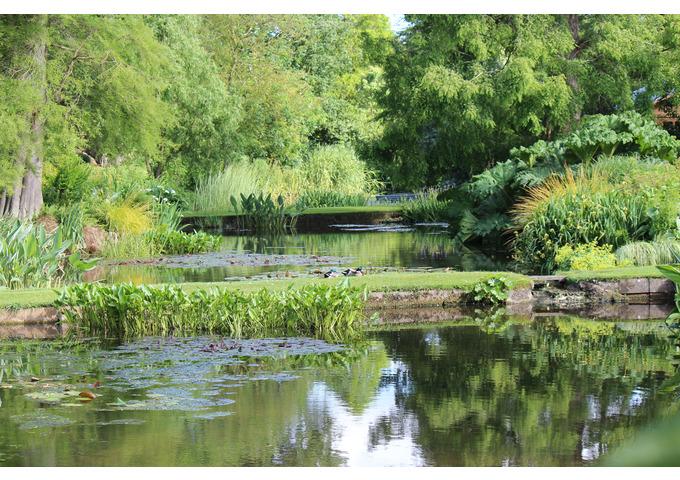 Water Gardens with David Ward