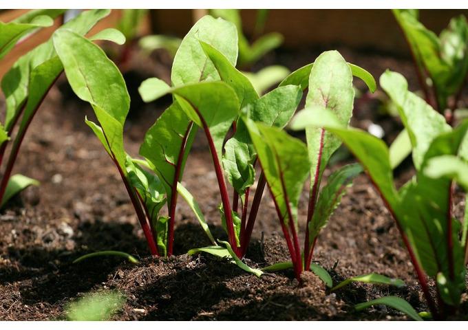 Tiny Troopers & Vege Plots - Garden Activity Day for Children