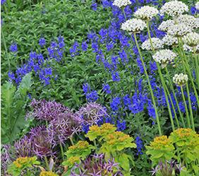 Full plant database