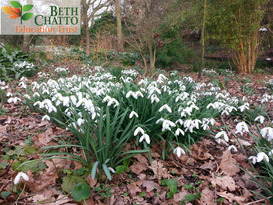 Super Snowdrop Weekend 25th Feb 11am Morning tour - limited places