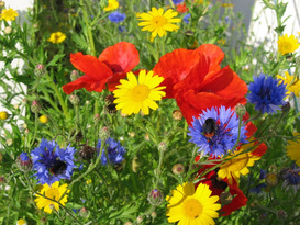Flower Power & Bumblebees!     Garden Activity Day for Children