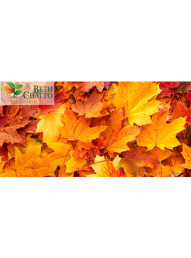 Autumn Creepers - Activity Morning for Children