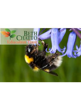 Bumblebee Identification Workshop (Beginners)