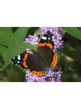 Beautiful Garden Butterflies - Garden Activity Day for Children